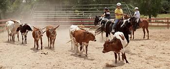 Ranch Team Building