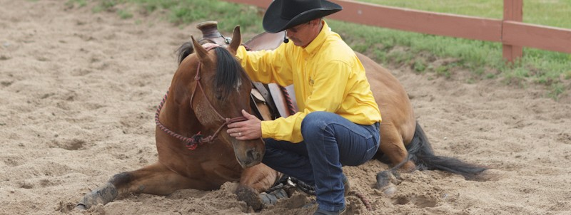 Parable of the Horse Demonstrations